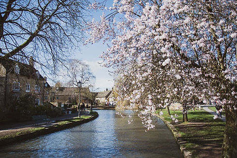cotswold blossom - comp.jpg