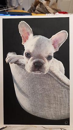 French Bull dog.jpg