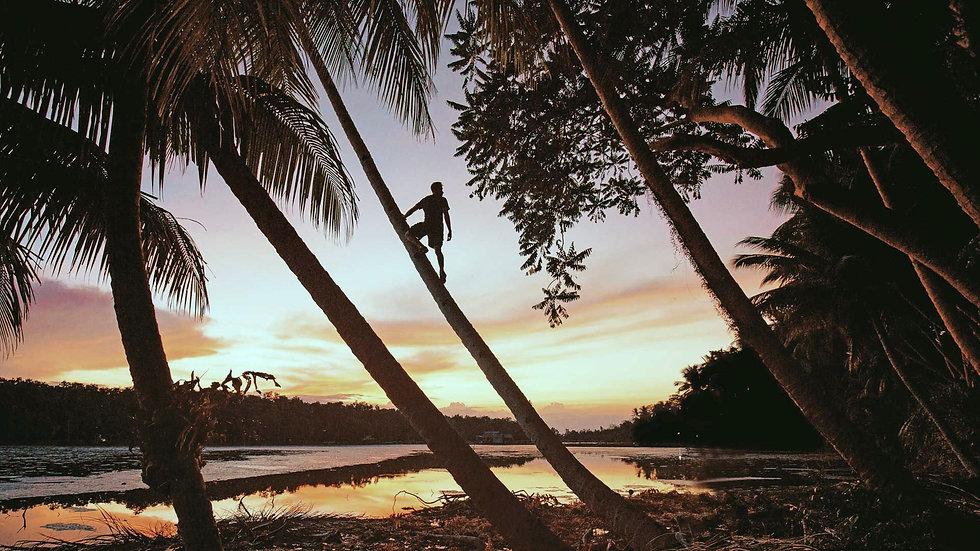 Apprenez à grimper sur un cocotier aux Philippines. ouiphilippines.com