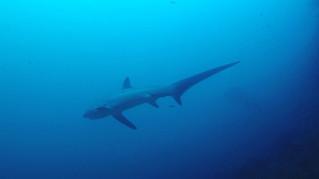 Malapascua • Le requin-renard et des plans inoubliables à faire