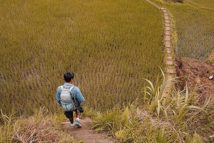 Trek rizières Ifugao d'Hapao