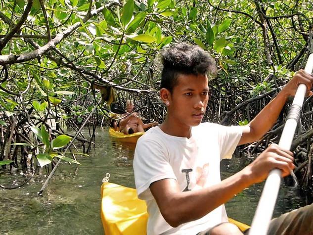 L'autre forêt les pieds dans l'eau : la mangrove de palétuviers