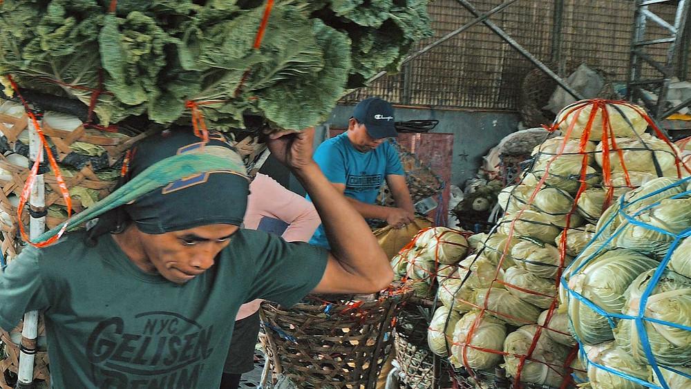Cebu, Courageux porteurs de Repolyo (Choux pommé). Portant une hotte de pas moins de 120 kg... sur la tête à chaque trajet