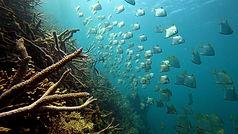 Coral Garden: Lusong coral garden: A voir absolument!
