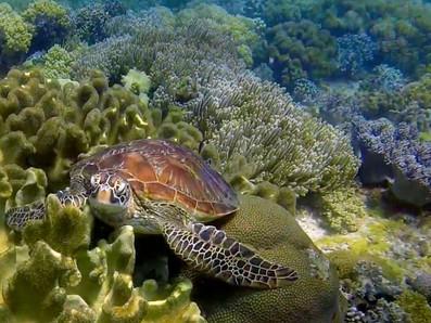 Micro-aventure snorkeling Coron • Une plongée avec tuba dans du corail en pleine forme