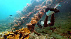 Why a local Tagbanua snorkeling guide?