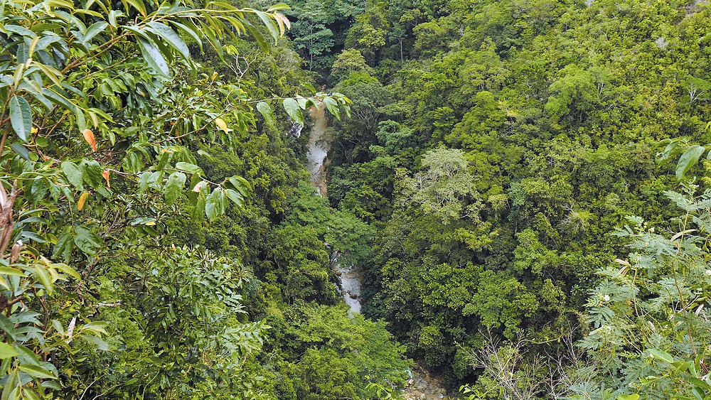 Végétation Mantalongon, les arbres semblent eux mêmes être de mini-forêts