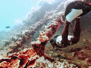 Les possibilités de snorkeling semblent comme la visibilité s'étendre à l'infini.