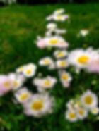 20190419_151709_edited.jpg
