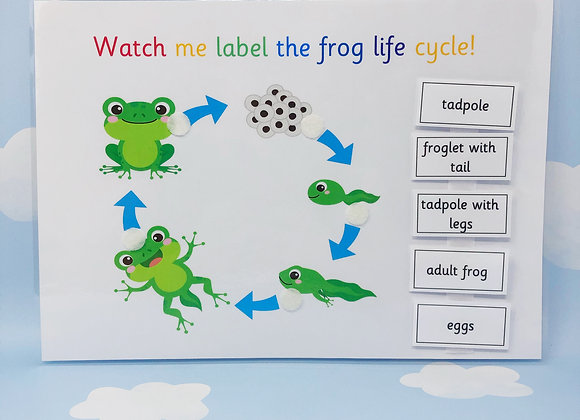 Frog Life Cycle - Learning Sheet - Science - Nature - Teaching Resource - KS2