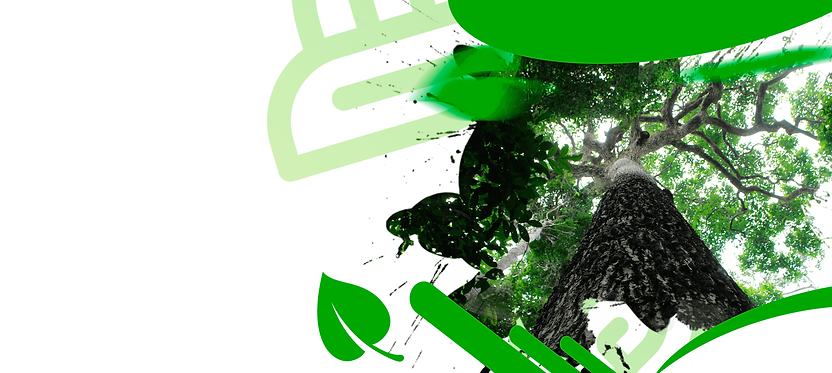 Banner Inicial Ecozoom.png
