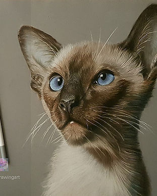 IN Finshed Cat Siamese KhrissDrawingart.