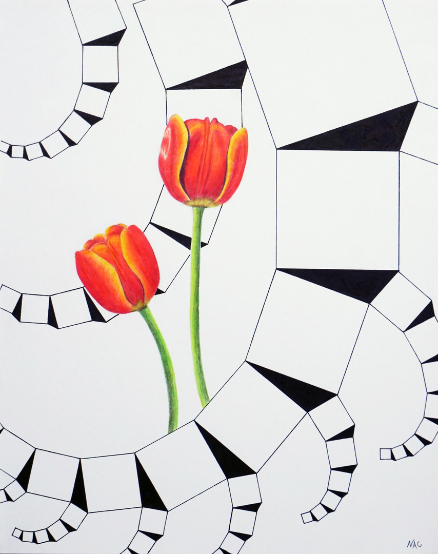 """Pythagorean Tulips 