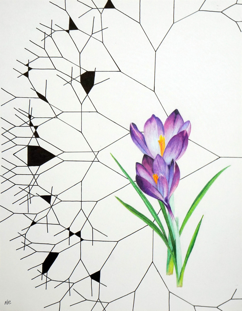 "Fractal Branching Crocus | 2019 | 11""x14"" 