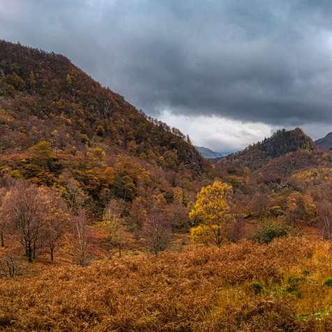 Borrowdale Jungle Autumn