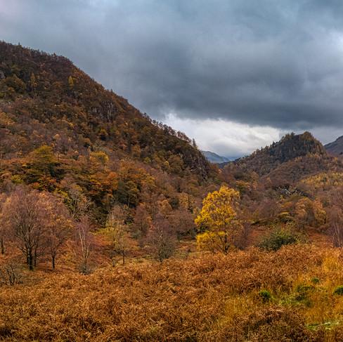 Borrowdale Jungle Autumn