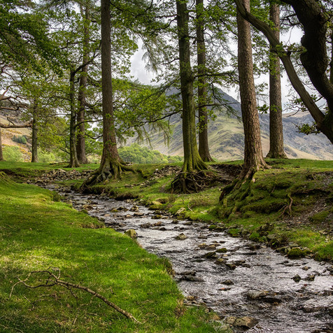 Woods at Buttermere