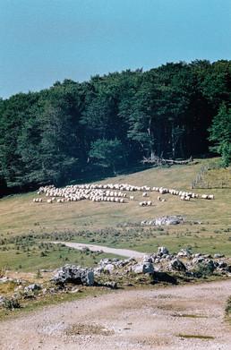 26 . Parque Natural de Aizkorri-Aratz