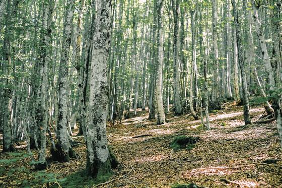 28 . Parque Natural de Aizkorri-Aratz