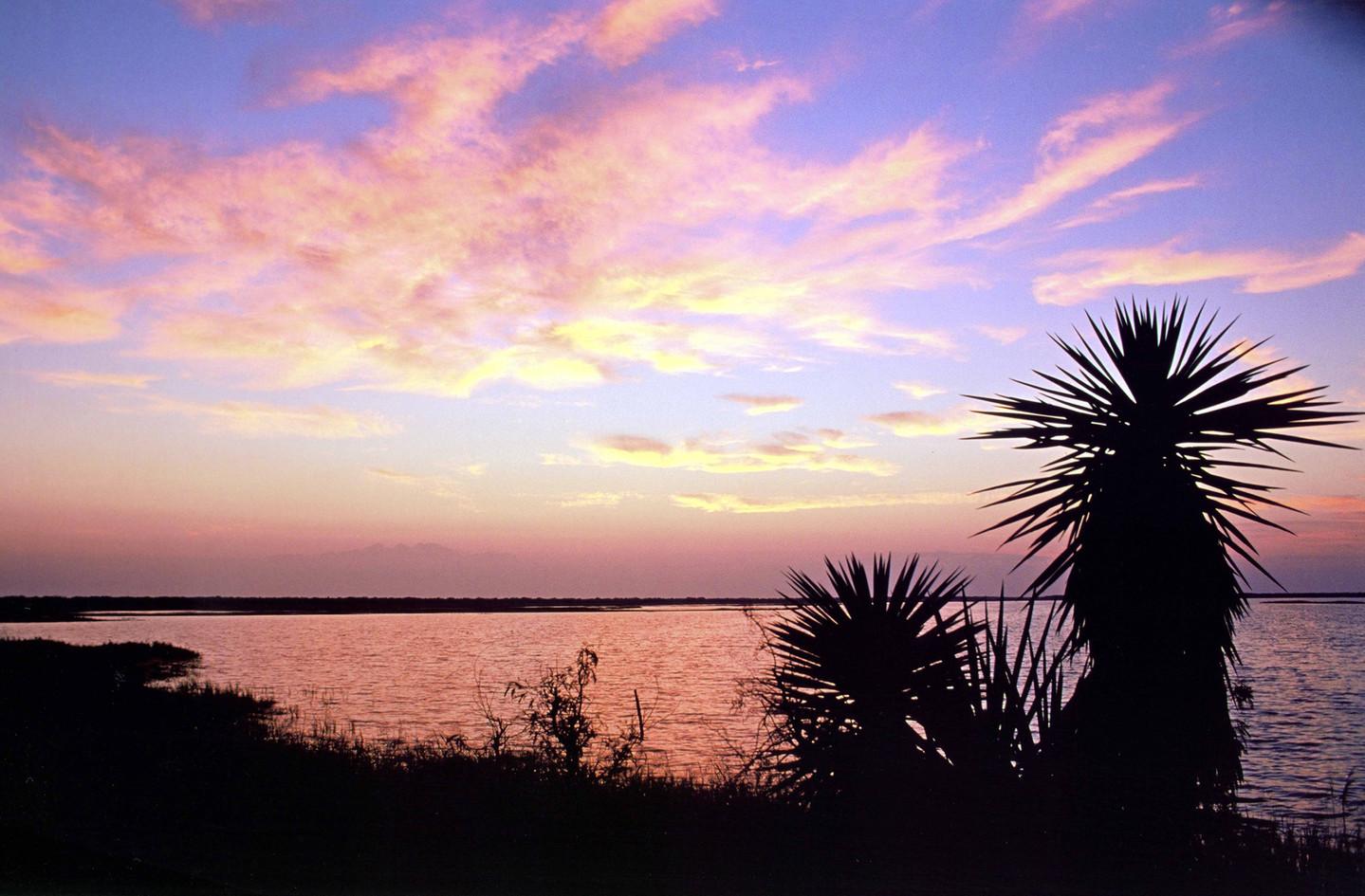 Sunrise and Yucca Carlos Fiol.jpg