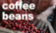 coffeebeansバナー.jpg