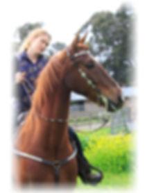 sale horses-Splashposing.jpeg