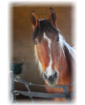 ride horses_MoonlightJasmine.jpeg