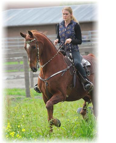 sale horses:Splashtroting - Sign.jpeg