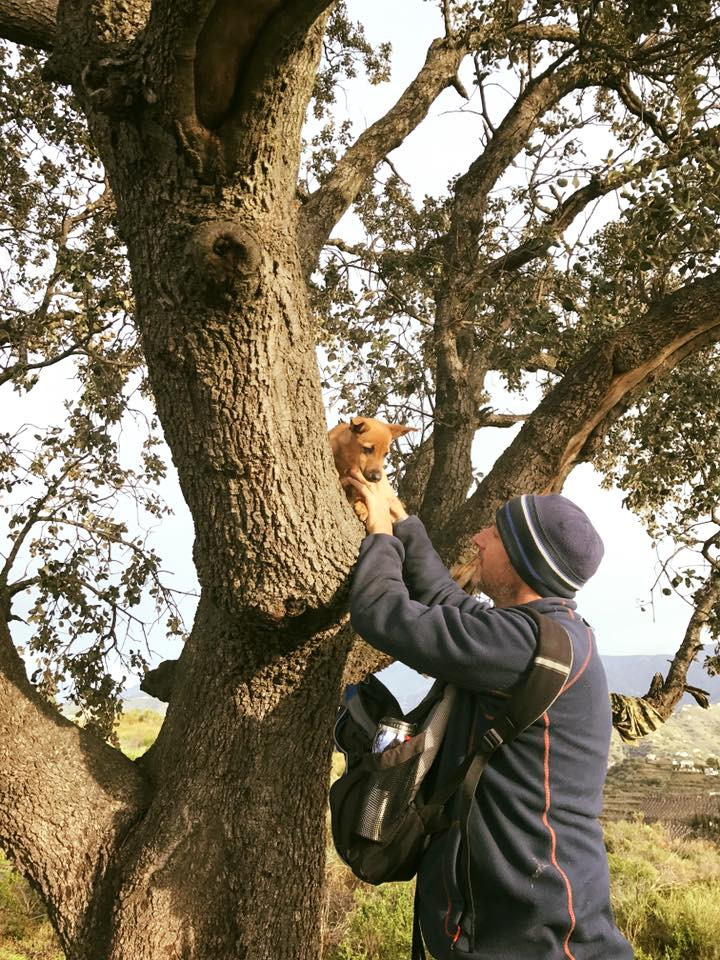 Our puppy Campy in a tree