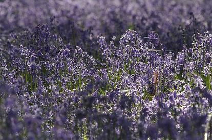 spring 008.jpg