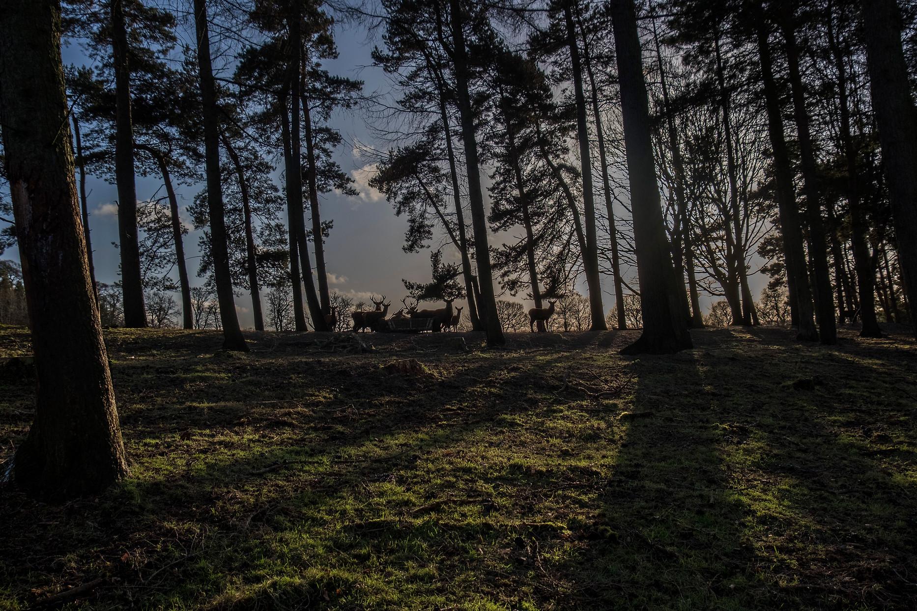 deer8.jpg