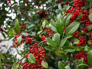 Holly Berry and other exotic flowers