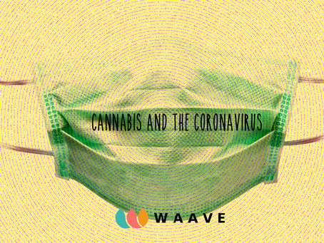 Cannabis and the coronavirus what you need to know