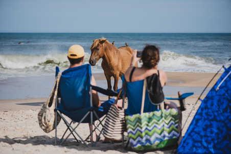 Assateague Island Ponies on the Beach © Caroline Martin Photography-4.jpg