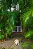 Balenbouche-Estate-St-Lucia-2.jpg