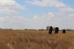 Last stop was an incredible safari