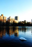ankorna i central park (5).jpg