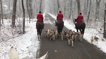 Heading back to the kennels on a snowy morning