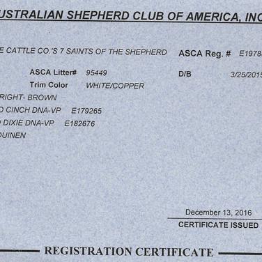 Seven's ASCA Registration Certificate