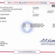 Seven's OFA CHIC Certificate