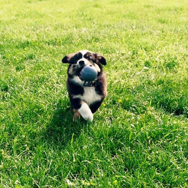 Puppy Seven