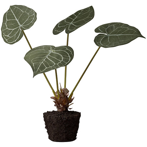 Lene Bjerre -  Flora taro - 42 cm.