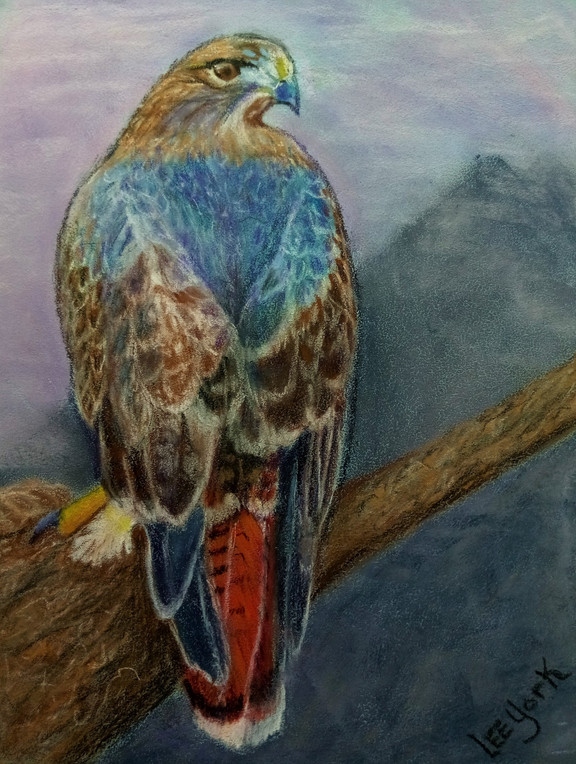 25. Red Tailed Hawk