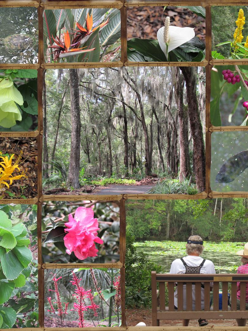 Oct 6 Arboretum