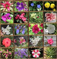 5 19 20 garden.png