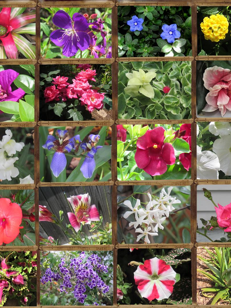 May 19 garden