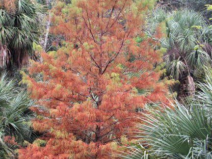 Why Do SOME Trees Change Color?