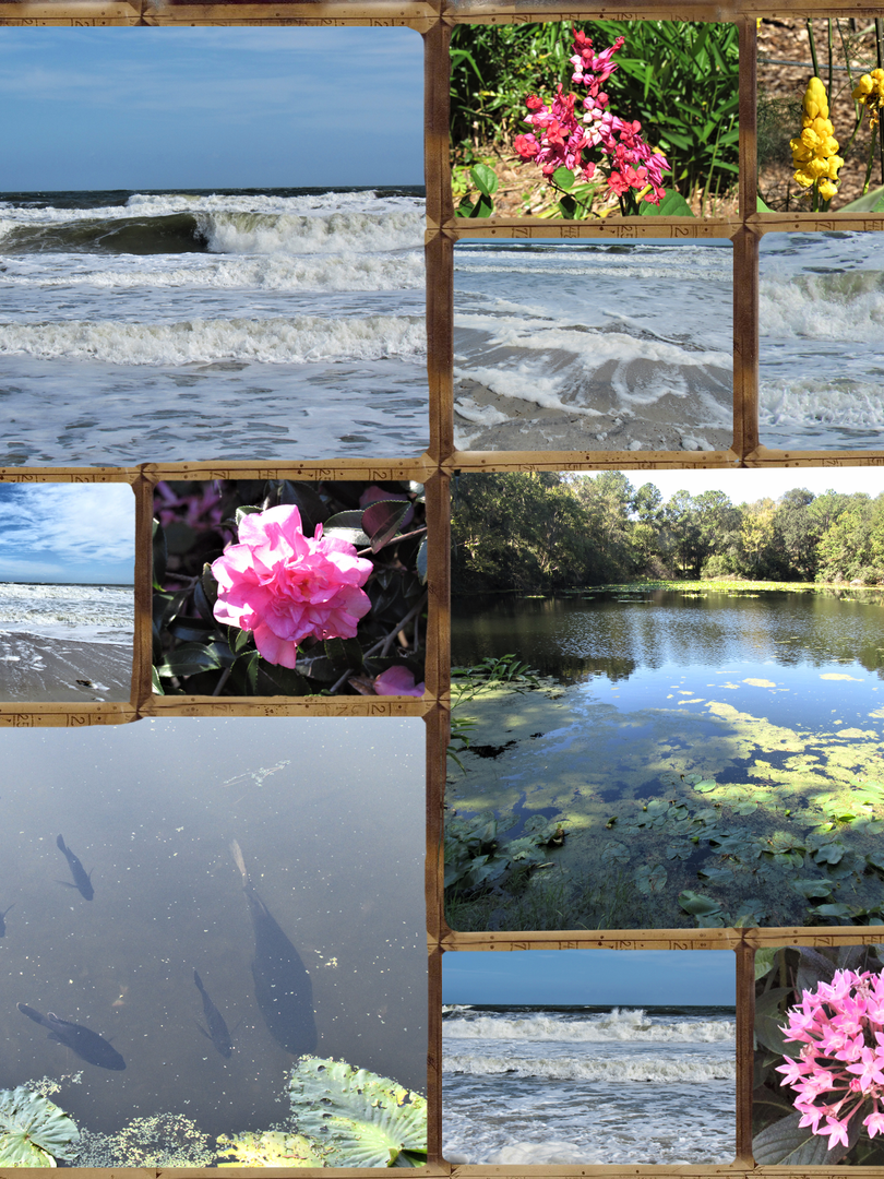 Nov 4 week Arboretum and Ocean.png