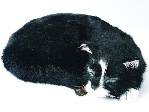 Able Seaman Simon Ship's cat model