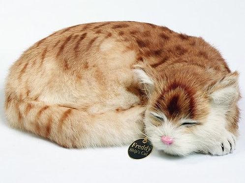 Ship's Cat Freddy - LAST ONE